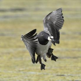 Winter Birding on the Saltmarsh